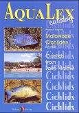 Malawisee-Cichliden\Cichlids from Lake Malawi