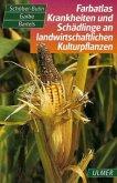 Farbatlas Krankheiten und Schädlinge an landwirtschaftlichen Kulturpflanzen