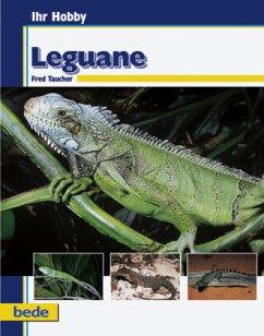 Ihr Hobby Leguane - Taucher, Fred