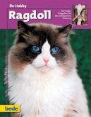 Ihr Hobby Ragdoll