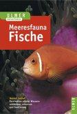 Meeresfauna. Fische