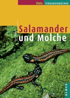 Salamander und Molche