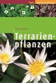 Terrarienpflanzen