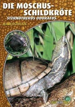 Die Moschusschildkröte - Schilde, Maik