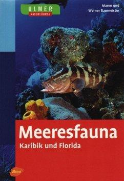 Meeresfauna Karibik und Florida
