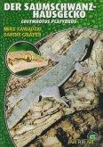 Der Saumschwanz-Hausgecko
