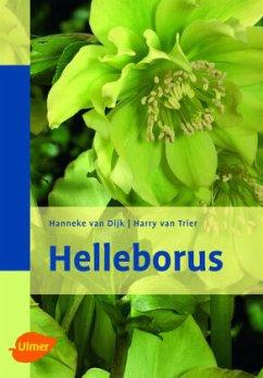 Helleborus