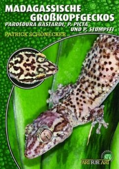 Madagassische Großkopfgeckos - Schönecker, Patrick