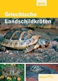 Griechische Landschildkröten, DVD