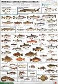 Mitteleuropäische Süßwasserfische / Schreiber Naturtafeln