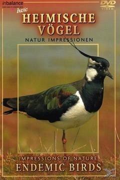 Impressionen heimischer Vögel - Diverse