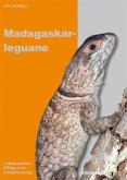 Madagaskarleguane