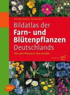 Bildatlas der Farn- und Blütenpflanzen Deutschlands - Haeupler, Henning; Muer, Thomas