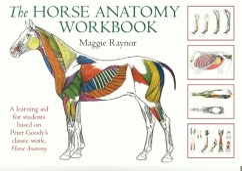 Horse Anatomy Workbook - Raynor, Maggie