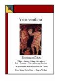 Vitis vinifera - Provings of Vine