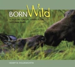Born Wild in Yellowstone and Grand Teton Nation...