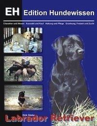 Labrador Retriever - Glebe, Dirk