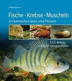 Fische, Krebse, Muscheln in heimischen Seen und Flüssen