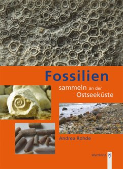 Fossilien sammeln an der Ostseeküste - Rohde, Andrea