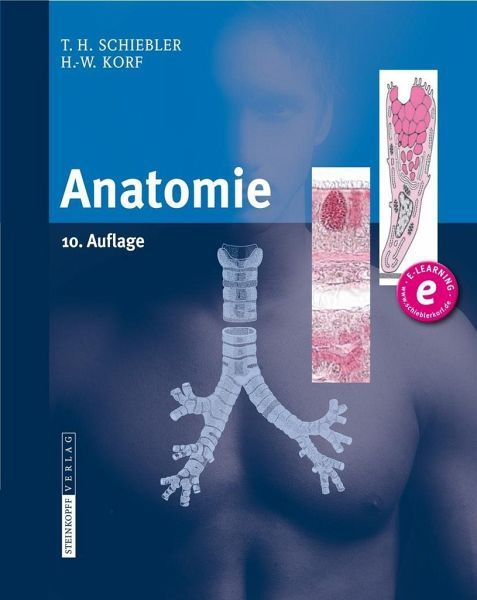 Anatomie von Theodor H. Schiebler; Horst-W. Korf - Fachbuch - bücher.de