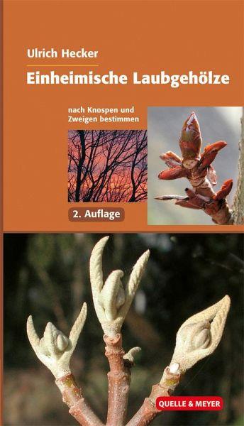 Einheimische Laubgehölze nach Knospen und Zweigen bestimmen - Hecker, Ulrich