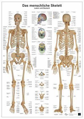 Knochen Des Menschen
