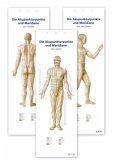 Akupunktur-Poster-Set, 3 Poster