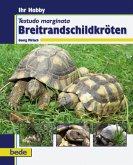Ihr Hobby. Testudo marginata Breitrandschildkröten