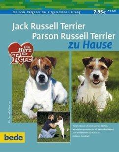 Jack Russel Terrier. Parson Russel Terrier zu Hause - Renczes, Cornelia