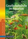 Gesellschaftsfische im Aquarium