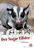 Der Sugar Glider