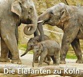 Die Elefanten zu Köln