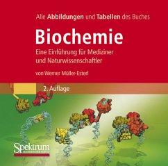 Biochemie, Die Abbildungen des Buches, DVD-ROM