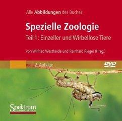 Spezielle Zoologie. Tl.1, CD-ROM