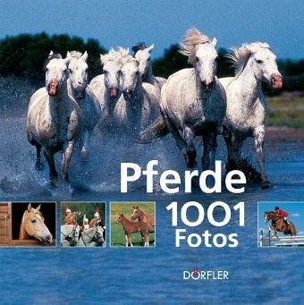 pferde 1001 spiele