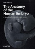 The Anatomy of the Human Embryo