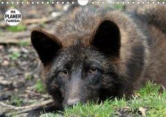 Im Rudel Zuhause - Der Wolf (Wandkalender 2019 DIN A4 quer)
