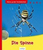 Die Spinne / Meine große Tierbibliothek