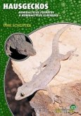 Hausgeckos - Hemidactylus Frenatus & Hemidactylus Flaviridis