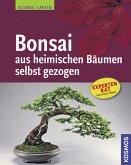 Bonsai aus heimischen Bäumen selbst gezogen