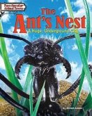 The Ant's Nest: A Huge, Underground City