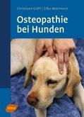 Osteopathie beim Hund