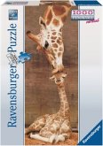 Ravensburger 15115 - The First Kiss, Giraffe, 1000 Teile Panorama Puzzle