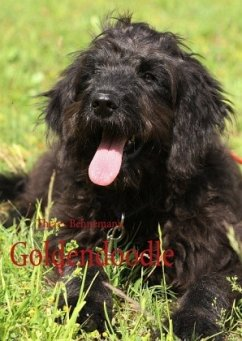 Goldendoodle - Behnemann, Theres