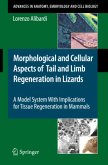 Morphological and Cellular Aspects of Tail and Limb Regeneration in Lizard