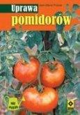 Uprawa pomidorow