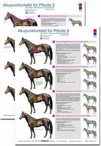 Akupunkturtafel für Pferde 5 + 6