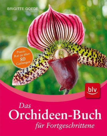 das orchideen buch f r fortgeschrittene von brigitte goede. Black Bedroom Furniture Sets. Home Design Ideas
