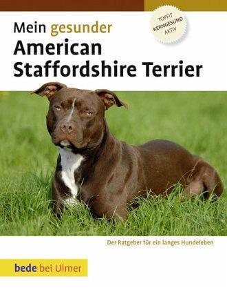 mein gesunder american staffordshire terrier von robert. Black Bedroom Furniture Sets. Home Design Ideas