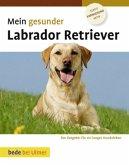 Mein gesunder Labrador Retriever